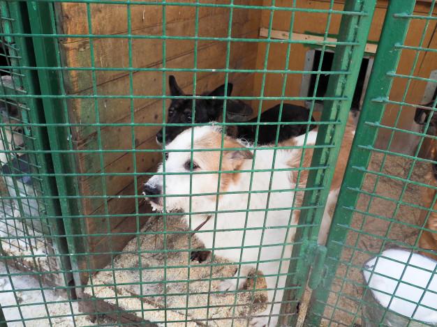 homeless dog shelter